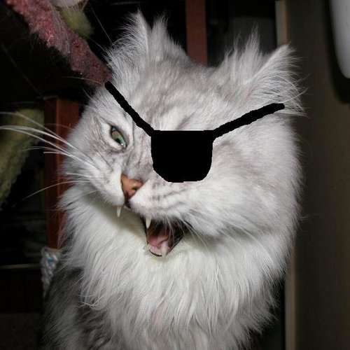 Pirate Angry Cat.jpg