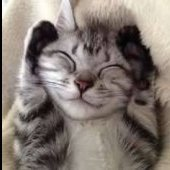 catfer